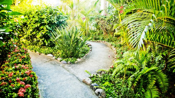 sayulita-garden