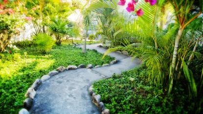 Sayulita Neighborhood Garden.jpg