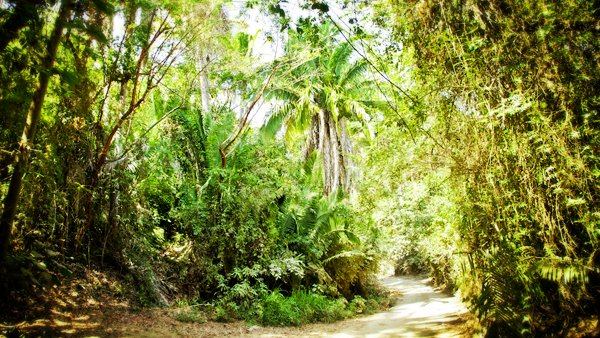 The road to Playa Los Muertos fro Ninos Heroes passes through the jungle