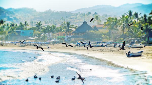 sayulita-beach-frigates