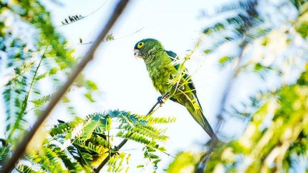 sayulita-parakeet-01