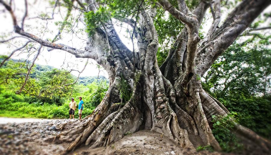 TreeFeature