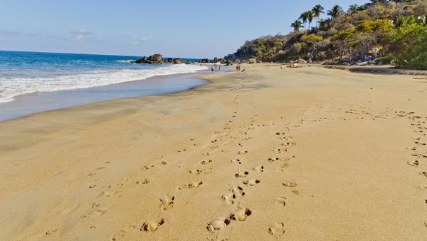 -en-tracks-in-the-sands-of-carricitos-beach-es-huellas-en-la-arena-de-carricitos-