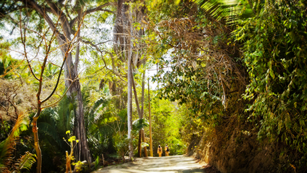 -en-serene-jungle-road-from-playa-los-muertos-es-camino-boscoso-de-playa-los-muertos-