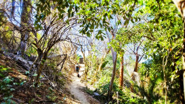 -en-this-trail-through-dry-forest-links-carricitos-to-a-dirt-road-es-sendero-entre-el-bosque-seco-hacia-carricitos-