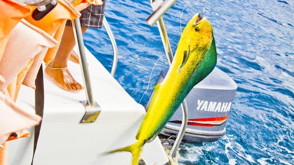 -en-fishing-can-be-a-tranquil-sunny-experience-es-pescar-puede-ser-una-experiencia-tranquila-y-soleada-