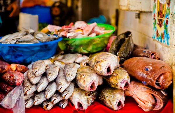 -en-the-waters-off-sayulita-are-full-of-fish-es-las-aguas-de-sayulita-estn-llenas-de-pescados-