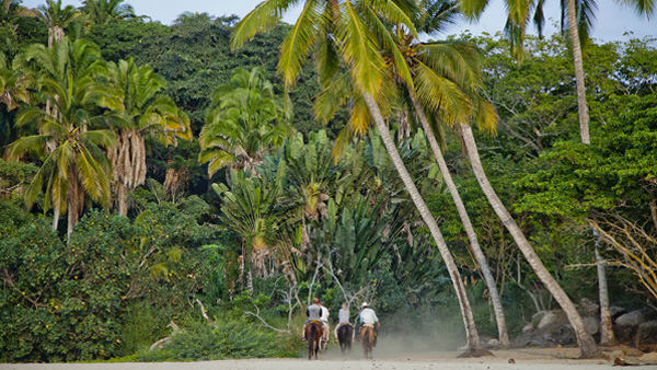 -en-exploring-the-jungle-on-horseback-es-explore-el-bosque-a-caballo-