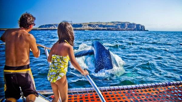 -en-whales-up-close-are-simply-awesome-es-estar-cerca-de-las-ballenas-es-simplemente-maravilloso-